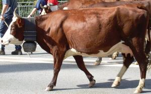fr cow