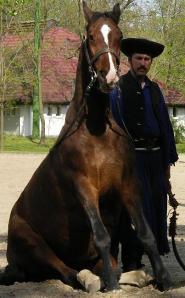 hungarian horse
